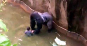 francisco-velasquez-Matan-a-gorila-en-zool-gico-de-EE--UU--para-salvar-a-ni-o